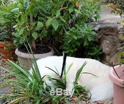 Antique Chinese Porcelain Famille Rose Export Qianlong Lotus Bowl Charger 11