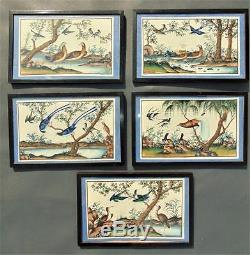 Set of 5 Chinese Watercolour Painting on Pith Exotic Birds 19th Century