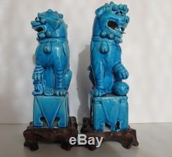 Rare Paire Anciennes En Porcelaine Foo Chien Turquoise Bleu Chinois De Chine En Bois